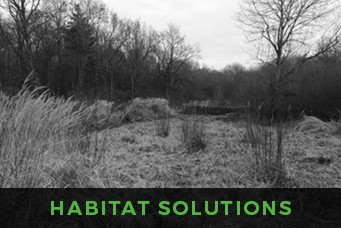 Focus Ecology - habitat management services