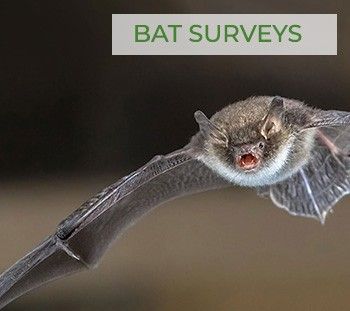 Ecology Survey - Bat Surveys