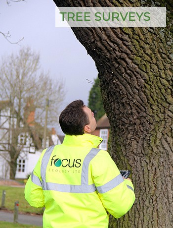 Ecology Survey - Tree Surveys - Tree inspection